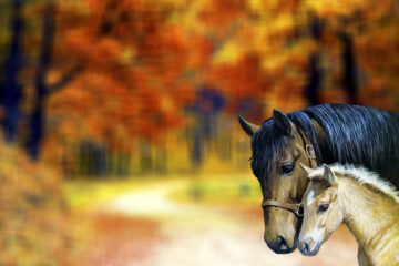 horsefeed